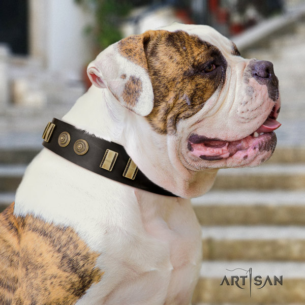 American Bulldog unusual full grain leather dog collar with adornments for everyday use