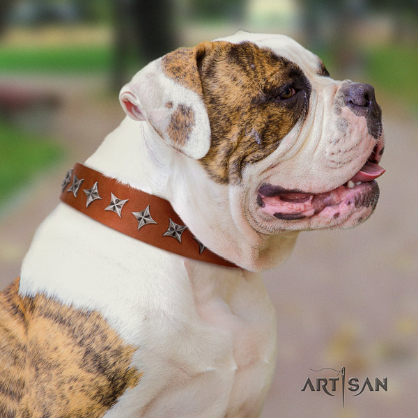 American Bulldog exquisite full grain leather dog collar with studs for comfy wearing