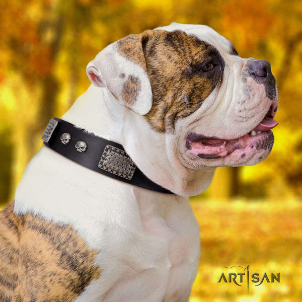American Bulldog designer full grain leather dog collar with embellishments for daily use