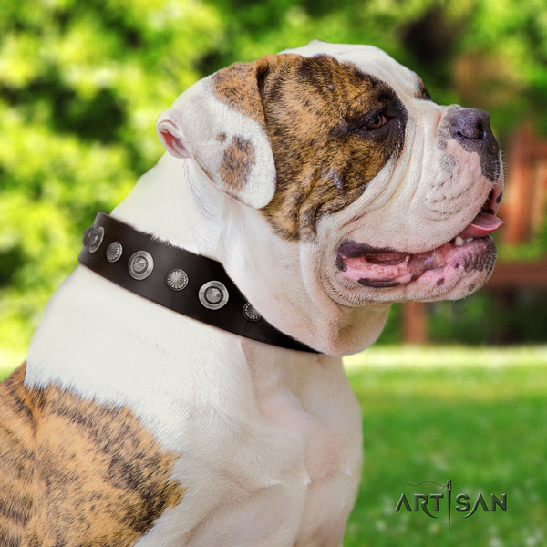American Bulldog inimitable leather dog collar with adornments for comfy wearing