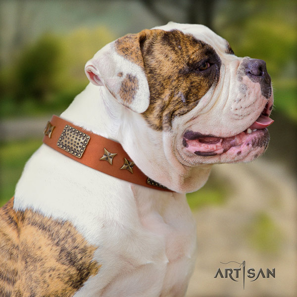 American Bulldog significant leather dog collar with adornments