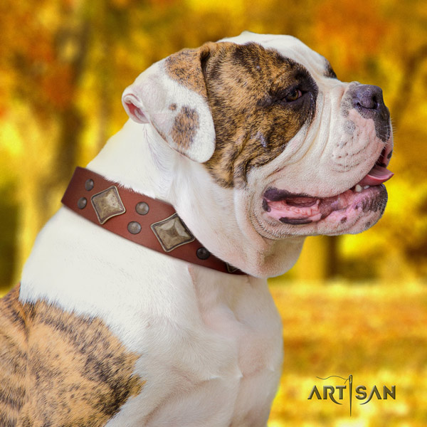 American Bulldog incredible genuine leather dog collar with decorations