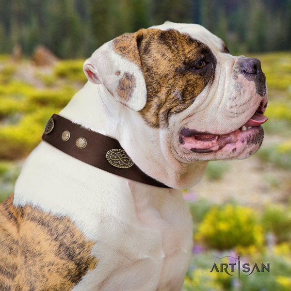 American Bulldog stylish full grain leather dog collar with embellishments for easy wearing