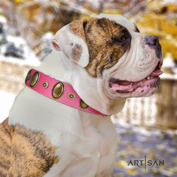 American Bulldog daily use genuine leather collar with awesome studs for your canine