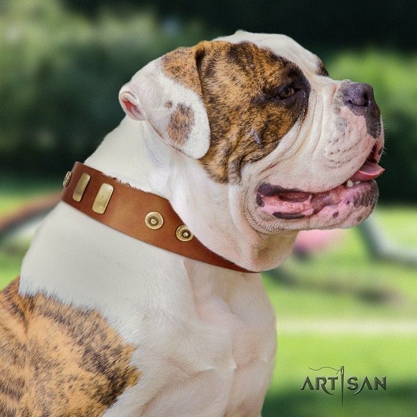 American Bulldog daily walking natural leather collar with remarkable embellishments for your pet