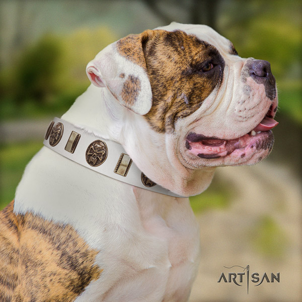 American Bulldog everyday use leather collar with embellishments for your canine