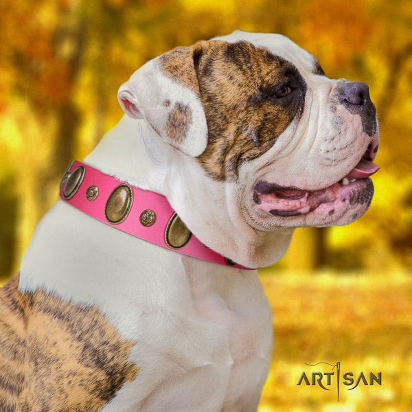 American Bulldog daily use genuine leather collar with incredible studs for your doggie
