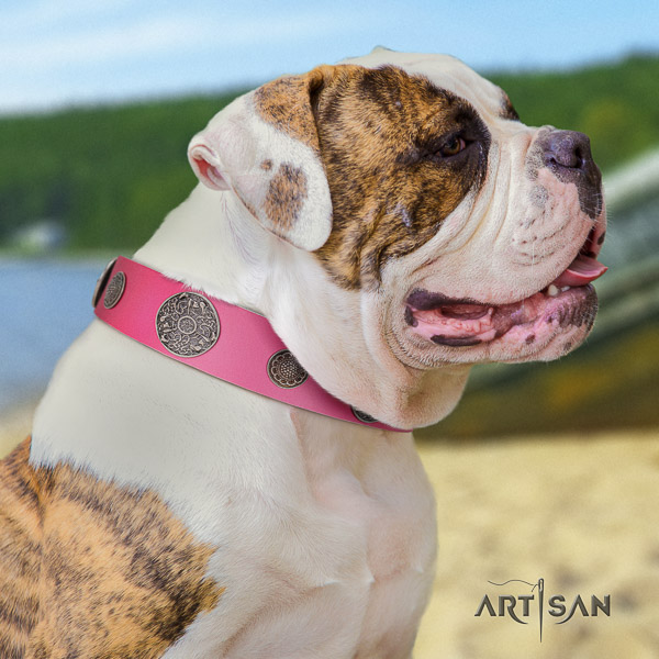American Bulldog walking natural leather collar with exceptional decorations for your pet