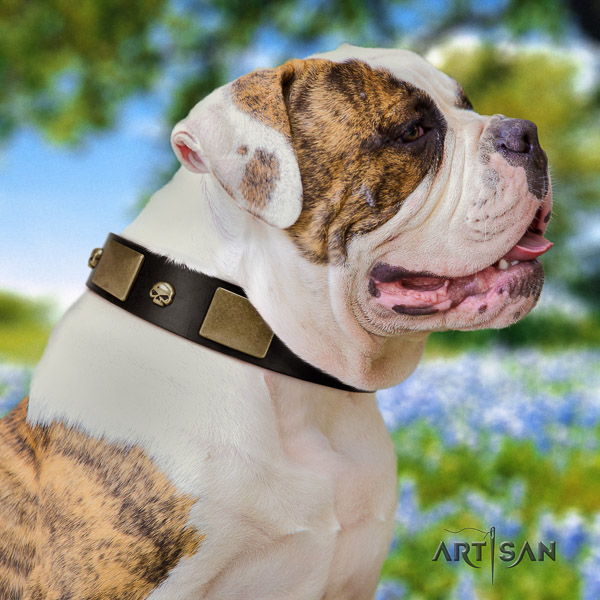 American Bulldog handy use leather collar with trendy adornments for your pet