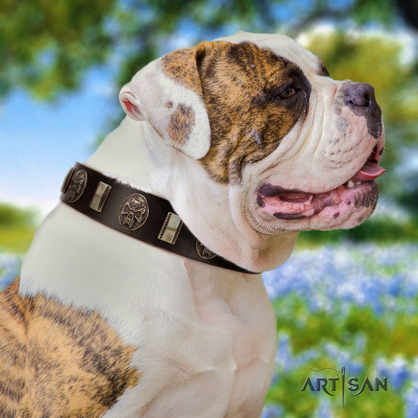 American Bulldog walking genuine leather collar with decorations for your doggie