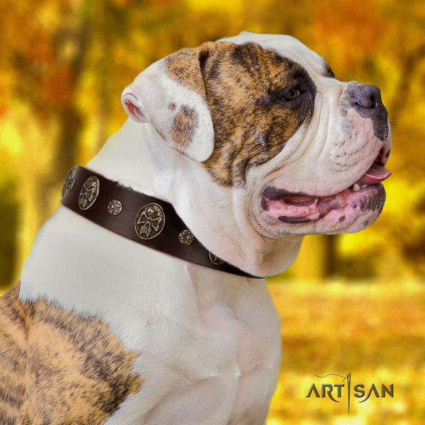 American Bulldog everyday use full grain leather collar with decorations for your pet