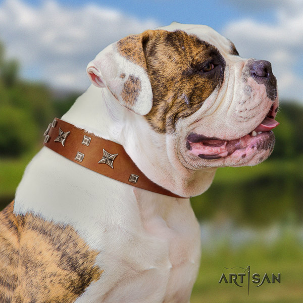 American Bulldog stylish walking leather collar with awesome adornments for your dog