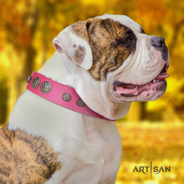 American Bulldog everyday use full grain leather collar with exquisite adornments for your dog