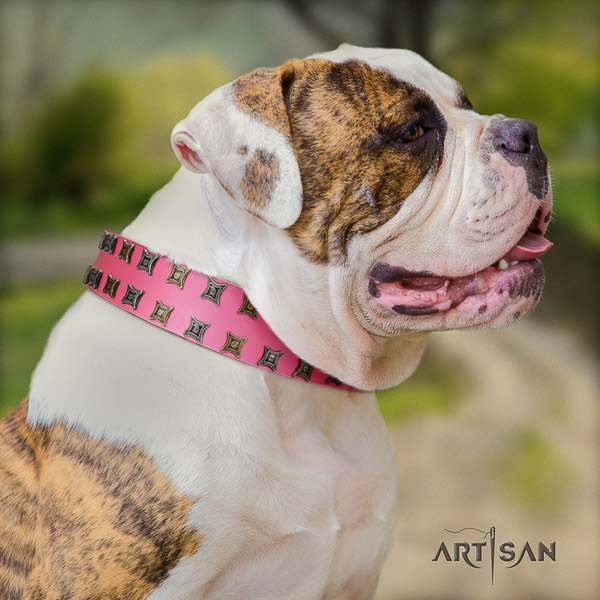 American Bulldog basic training genuine leather collar with incredible adornments for your canine