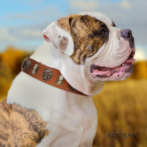 American Bulldog daily walking genuine leather collar with embellishments for your doggie