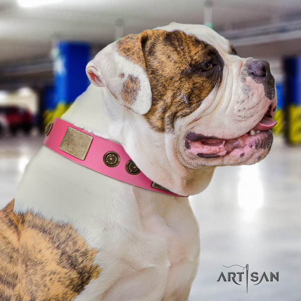 American Bulldog stylish walking genuine leather collar with adornments for your dog