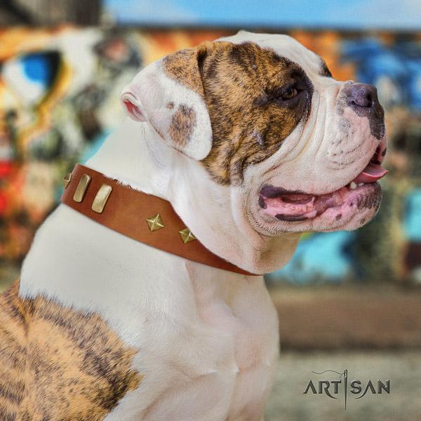 American Bulldog daily walking full grain leather collar with incredible adornments for your doggie