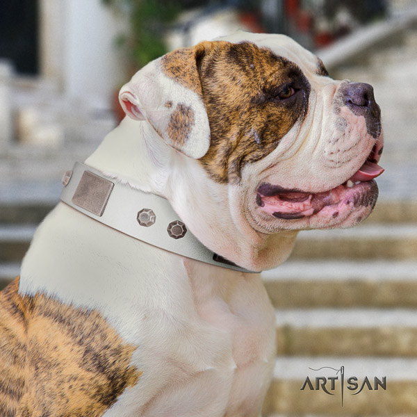 American Bulldog daily use natural leather collar with amazing adornments for your dog