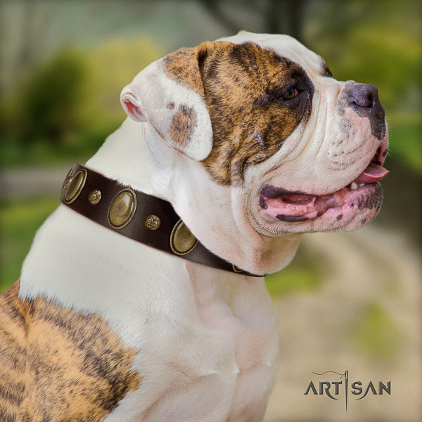 American Bulldog stylish walking natural leather collar with adornments for your doggie