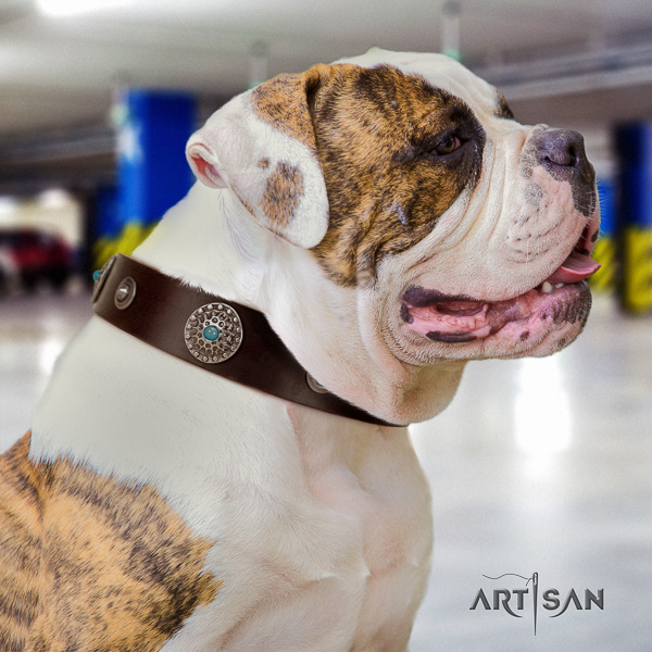 American Bulldog walking genuine leather collar with unique studs for your canine