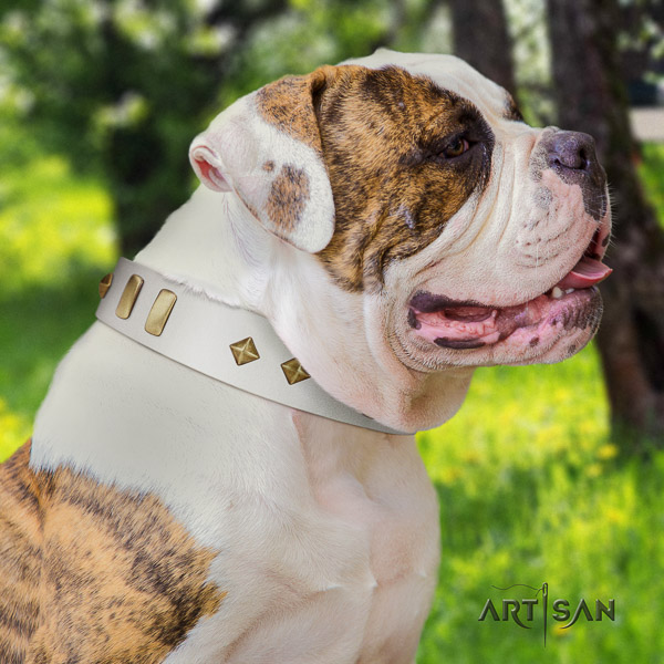 American Bulldog comfy wearing genuine leather collar with exquisite studs for your canine