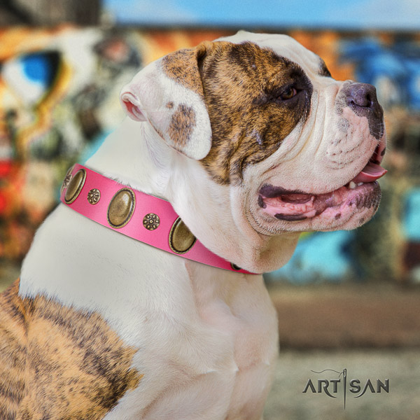 American Bulldog everyday use full grain leather collar with inimitable studs for your dog