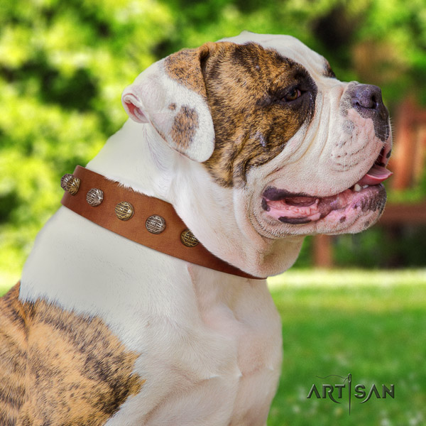 American Bulldog stylish walking full grain leather collar with unique studs for your doggie