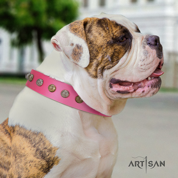 American Bulldog stylish walking genuine leather collar with fashionable decorations for your four-legged friend