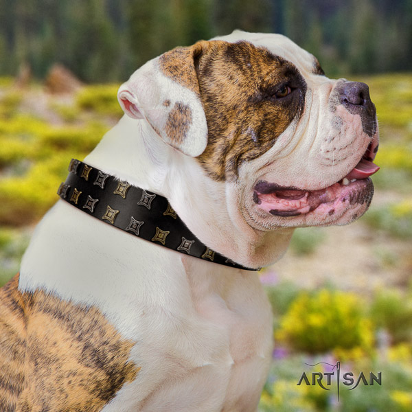 American Bulldog fancy walking full grain leather collar with stylish decorations for your dog