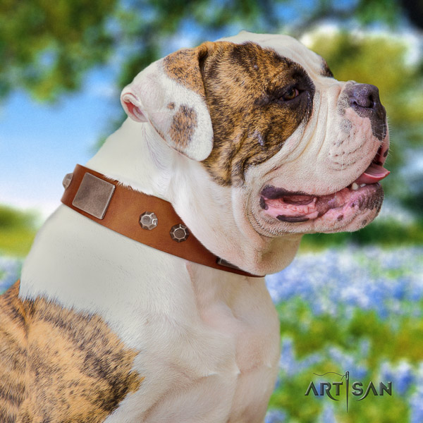 American Bulldog everyday use genuine leather collar with impressive embellishments for your dog