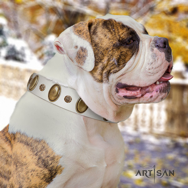 American Bulldog comfortable wearing genuine leather collar with incredible decorations for your pet