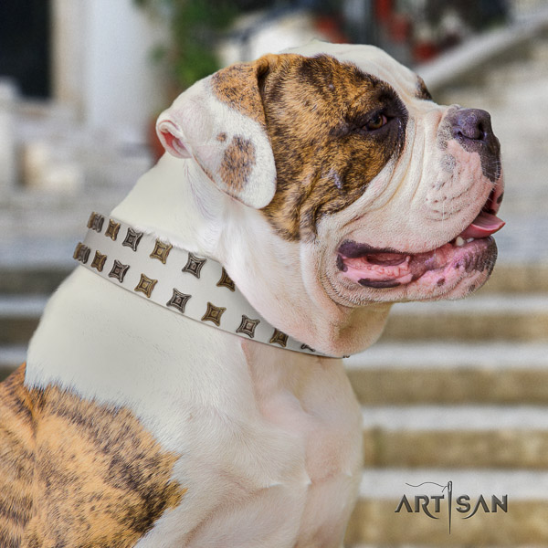 American Bulldog stylish walking leather collar with stunning embellishments for your canine