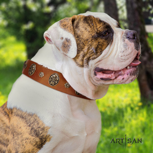 American Bulldog everyday use full grain natural leather collar with adornments for your dog