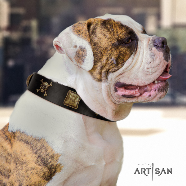 American Bulldog fancy walking full grain leather collar with stylish decorations for your four-legged friend