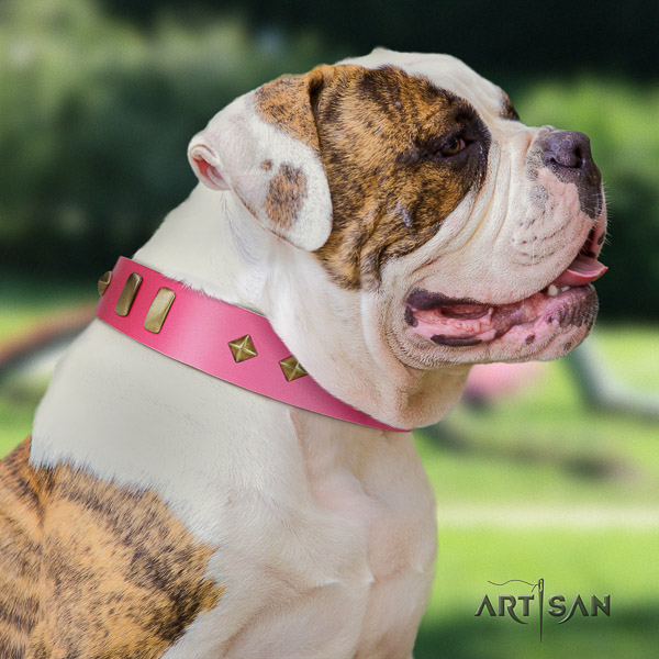 American Bulldog easy wearing genuine leather collar with inimitable embellishments for your dog
