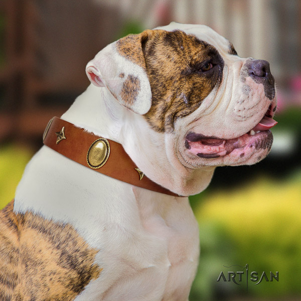 American Bulldog daily use full grain leather collar with awesome studs for your doggie