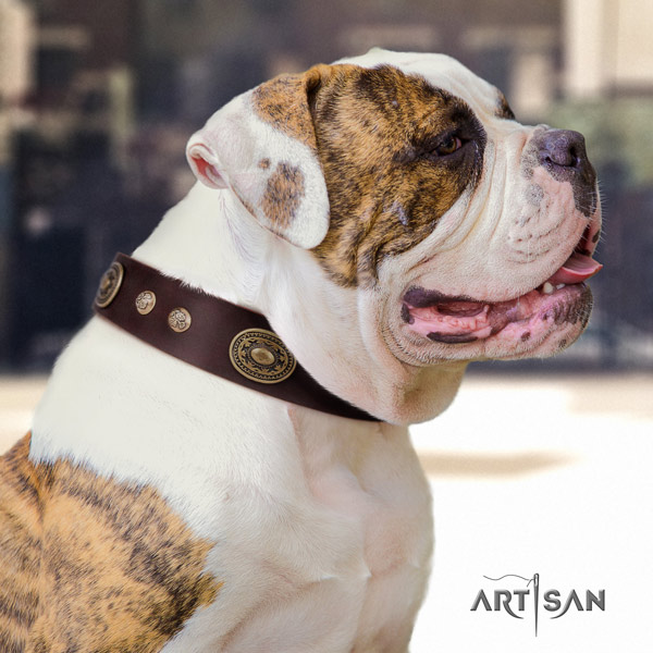 American Bulldog stylish genuine leather dog collar with adornments for daily walking
