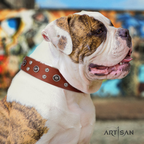 American Bulldog top notch genuine leather dog collar with embellishments