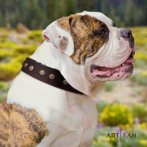 American Bulldog awesome leather dog collar with decorations