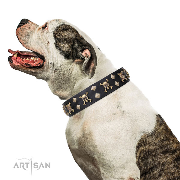 American Bulldog exquisite full grain leather dog collar for easy wearing