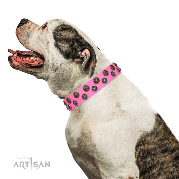 American Bulldog easy adjustable full grain leather dog collar for easy wearing