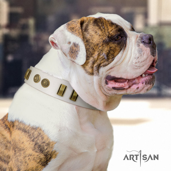 American Bulldog amazing full grain leather dog collar with studs for fancy walking