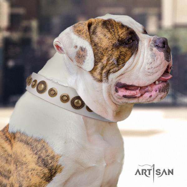 American Bulldog stylish leather dog collar with studs