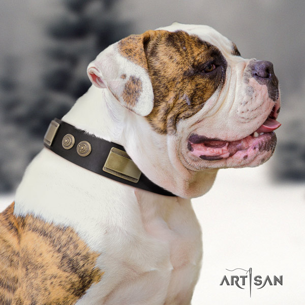 American Bulldog impressive genuine leather dog collar with studs for daily walking