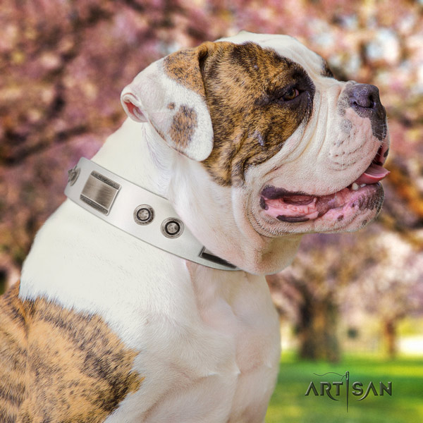American Bulldog stylish design genuine leather dog collar with decorations for handy use