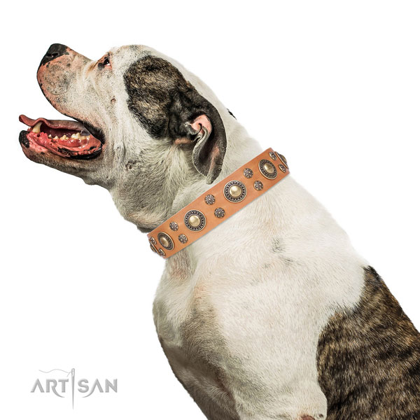 American Bulldog adorned natural genuine leather dog collar for comfortable wearing
