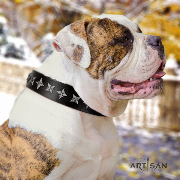 American Bulldog stylish design leather dog collar with decorations for daily walking