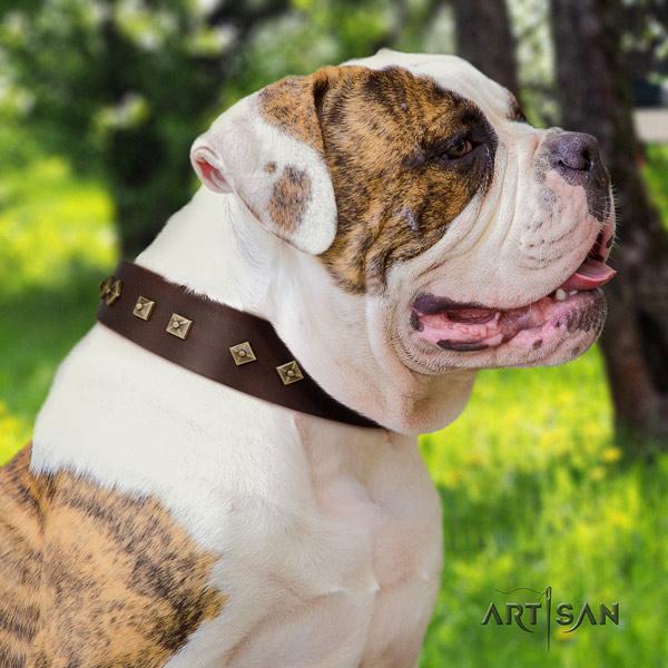American Bulldog stylish leather dog collar with adornments for daily use
