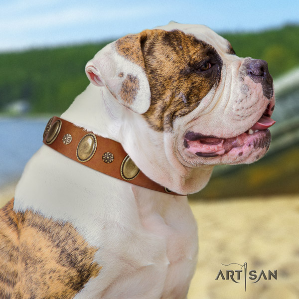 American Bulldog handy use natural leather collar with significant decorations for your dog