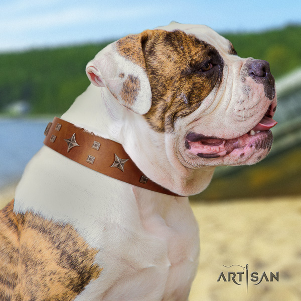American Bulldog daily walking genuine leather collar with stylish design embellishments for your doggie